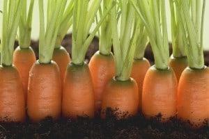 sondas y horticultura
