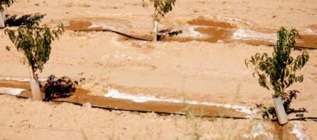 Conductividad Electrica de la solución del suelo ¿Cómo calcularla?